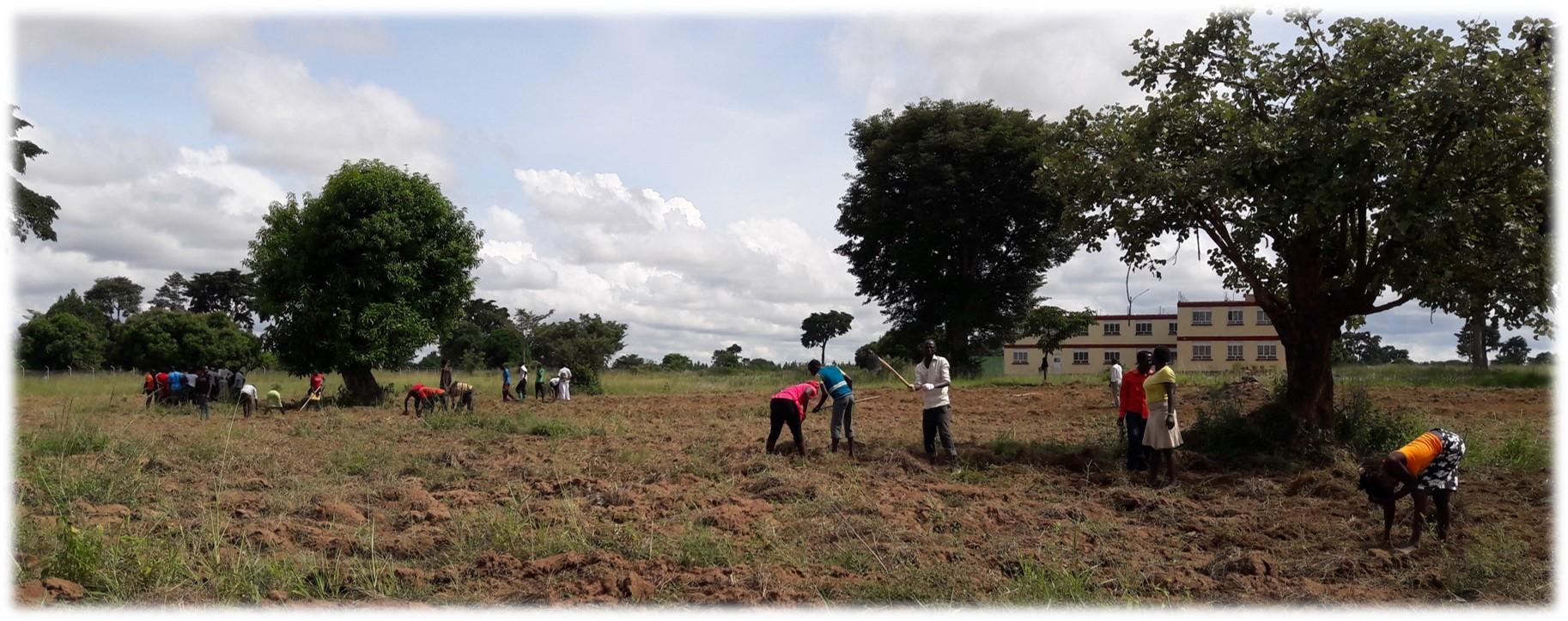 Demo Farm Preparation in progress